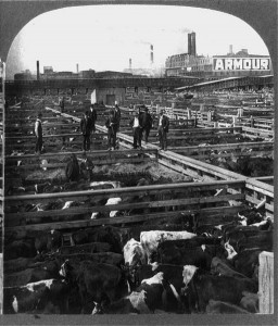 The cattle pens at the Chicago stockyards.